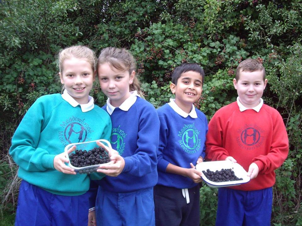 Primary School Collecting Fruit